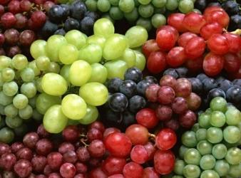 Ahora podrás calcular la fertirrigación de cientos de variedades de uva de vino y uva mesa.