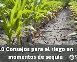 10 Consejos para el riego en momentos de sequía